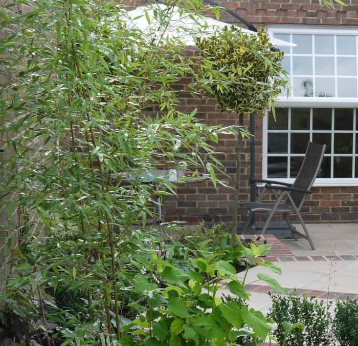 Courtyard Town Garden